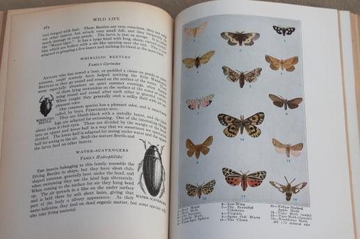 1920s vintage natural history book w/ color illustrated plates, birds, animals, botany