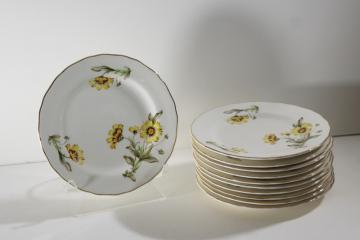 Autumn Mist yellow coreopsis flowers vintage Canonsburg china plates