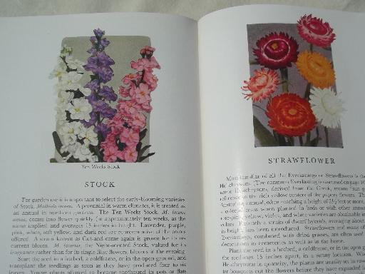 Garden Flowers in color, lovely vintage hand-colored botanical photos