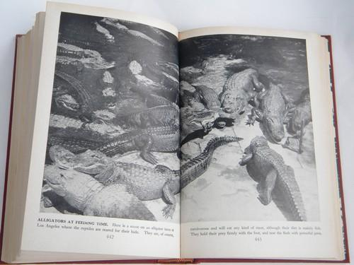 Wild Life the World Over, vintage natural history book, lots of photos