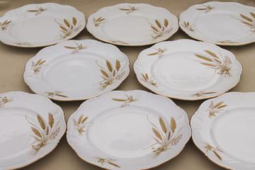 Winterling Bavaria autumn harvest wheat pattern china dinner plates, mid-century vintage
