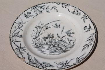 aesthetic antique china plate, Indus birds & pond grasses, black transferware china