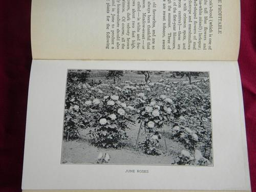 antique 1912 gardening and small scale farming book, county homesteading