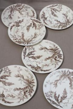 antique Wedgwood seaweed brown transferware china, aesthetic vintage natural history print plates