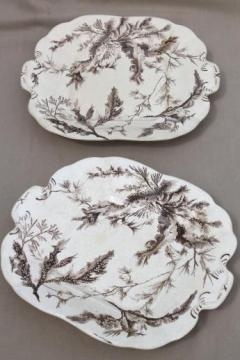 antique Wedgwood seaweed brown transferware china, aesthetic vintage natural history print serving dishes