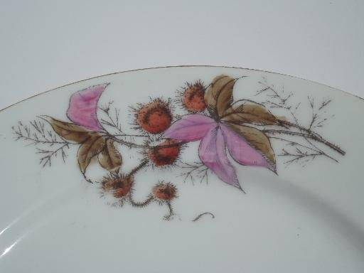 antique china plates and bowls, butterfly moth and horse chestnut art