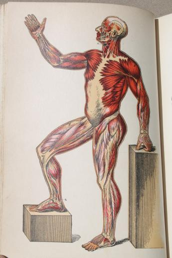 antique medical book, 1880s pro-prohibition physiology text w/ color anatomy prints