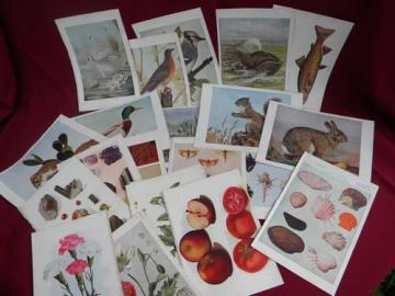 antique natural history full color litho plates fruits, flowers, birds