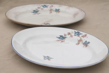 antique vintage bluebird china dishes, shabby chic serving platters or trays