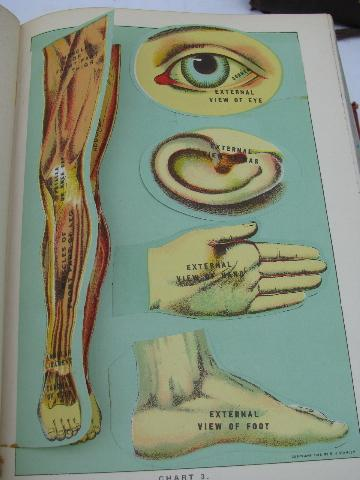 antique vintage medical health books, many litho illustrations, anatomy fold-outs