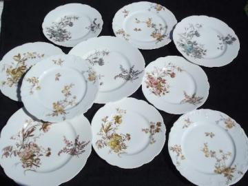 assorted antique Haviland Limoges china plates, lot fall floral patterns