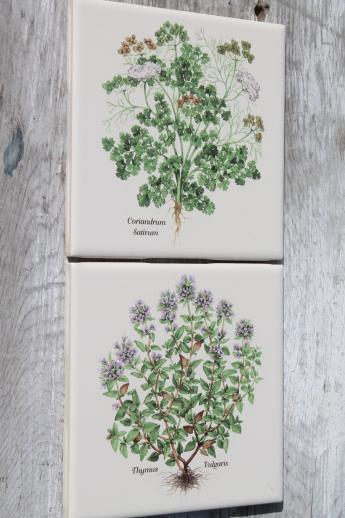 ceramic kitchen tiles w/ botanical herb prints of culinary herbs
