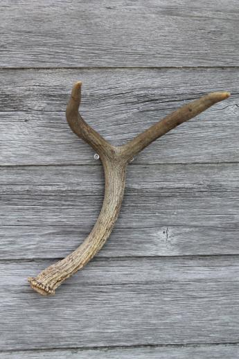 Collection Of Deer Antler Mounts Amp Antlers On Rustic Wood
