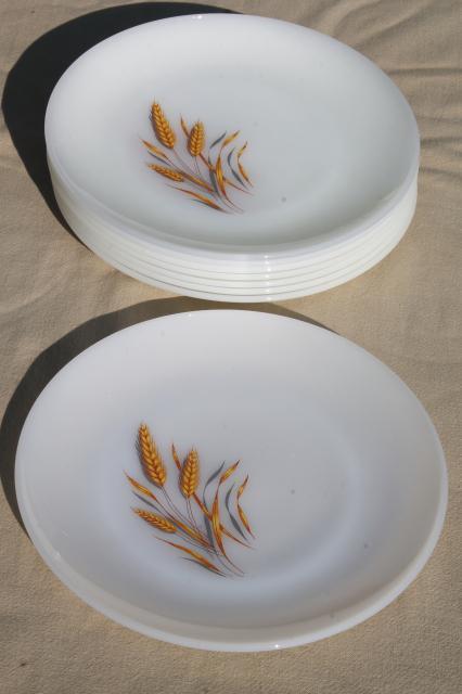Gold Wheat Fire King Milk Glass Set Of 8 Dinner Plates