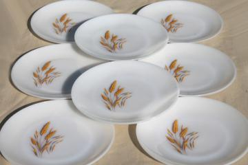 gold wheat Fire King milk glass, set of 8 dinner plates golden harvest pattern