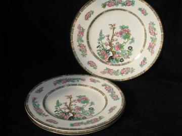 large old India Tree pattern English china plates, multi-colored Indian Tree