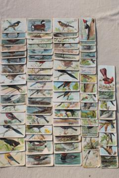 lot advertising trade cards Birds of America bird prints, vintage scrapbook ephemera