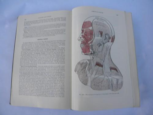 Old 50s Vintage Medical Book Grays Anatomy Human Body Color Engravings