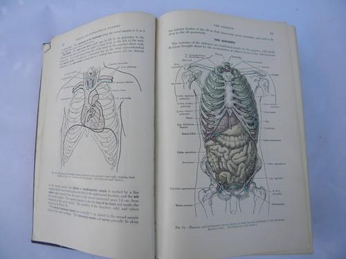 50s Vintage Medical Book Grays Anatomy Human Body Color Engravings