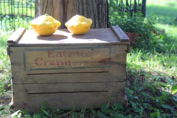 primitive vintage wood box, Eatmor Cranberries fruit crate, rustic farmhouse storage