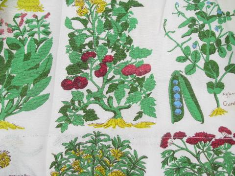 retro kitchen botanical latin herbs & vegetables print cafe curtains