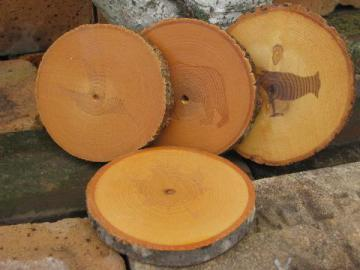 rough wood coasters for lodge, cabin or camp, log slices w/ bark