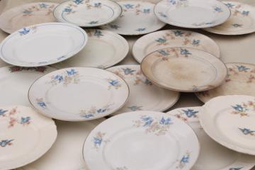 shabby antique bluebird china plates, mismatched vintage china w/ blue birds