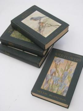 vintage 1920s Little Nature Library, natural history / botanical color plates