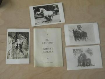 vintage Ernest Ritter Grand Canyon midget horses photo postcards/booklet