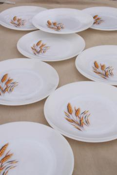 vintage Fire King golden wheat milk glass dinner plates, set of 8