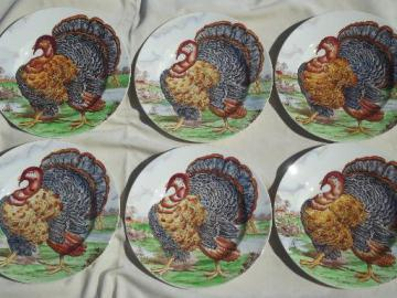 vintage Midwinter / Wedgwood china Thankgiving turkey dinner plates set