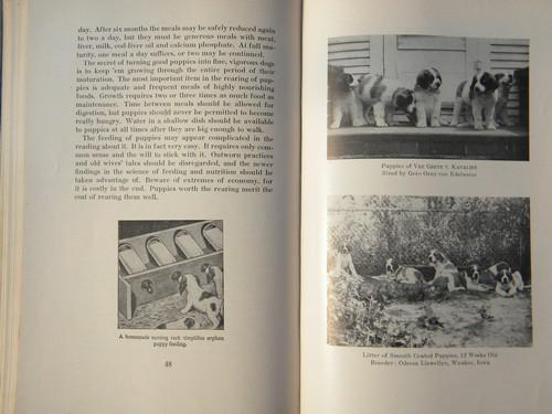 vintage The Complete Saint Bernard w/many dog photos&illustrations