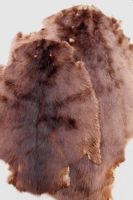Vintage Beaver Fur 58