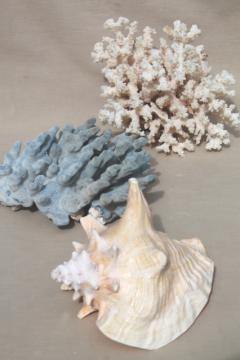 vintage conch sea shell & corals, large branch corals,& natural history specimens