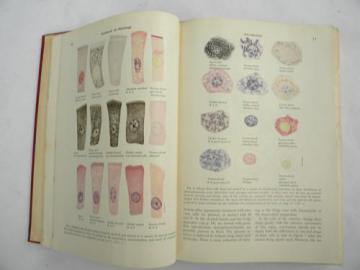 vintage medical Textbook of Histology with over 200 color illustrations