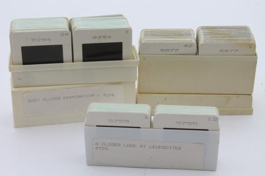 vintage medical biology slides, ASCP photos of leukocytes or white blood cells etc., lot of 120 slides