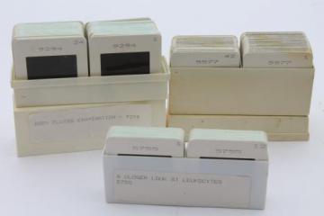 vintage medical biology slides, ASCP photos of leukocytes or white blood cells etc., lot of 120 slides