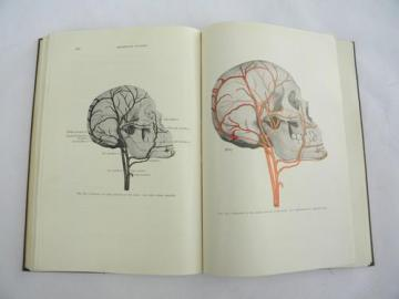 vintage medical dentistry book Oral Anatomy with 300+ illustrations
