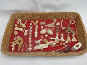 vintage natural history specimen collection, animal bones, bird eggs etc